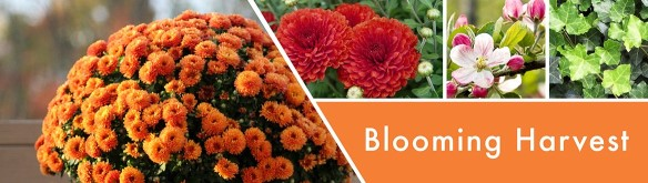 Goosecreek Blooming harvest